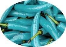 Blue-Turquoise-Pepper - bibit mas tidar