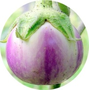 terong bulat ungu